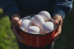 Huevos ecológicos a disposición Imagenes de archivo
