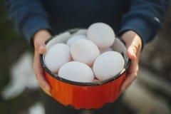 Huevos ecológicos a disposición Fotos de archivo
