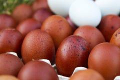 Huevos ecológicos naturales del color marrón y azul Foto de archivo