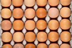 Huevos en bandeja Imagen de archivo libre de regalías