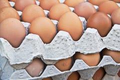 Huevos en bandeja Foto de archivo libre de regalías