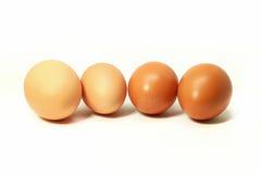Huevos en blanco Imágenes de archivo libres de regalías