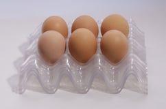 Huevos en células plásticas. Imagen de archivo