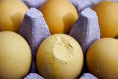 Huevos en cartón fotografía de archivo libre de regalías
