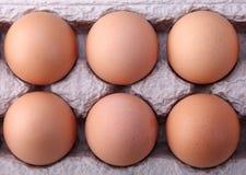 Huevos en caso protector Fotografía de archivo libre de regalías