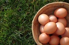 Huevos en cesta Fotografía de archivo
