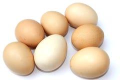 Huevos en el fondo blanco Imagen de archivo