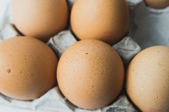 Huevos en el panel del papel del huevo Imagen de archivo libre de regalías