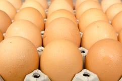 Huevos en el paquete foto de archivo