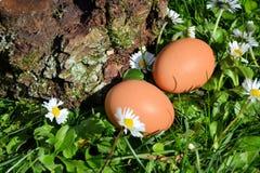 Huevos en hierba Imagen de archivo libre de regalías