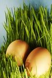 Huevos en hierba Foto de archivo libre de regalías