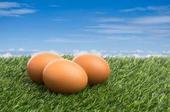 Huevos en hierba verde Imagen de archivo libre de regalías