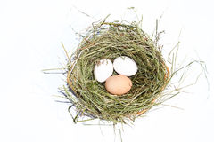 Huevos en jerarquía imagen de archivo libre de regalías