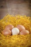 Huevos en jerarquía Imagenes de archivo