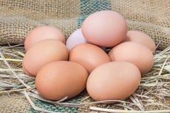 Huevos en jerarquía de la paja del heno Imagen de archivo