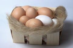 Huevos en la bandeja Fotografía de archivo libre de regalías