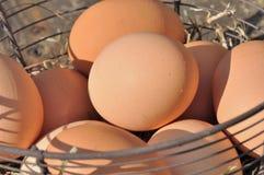 Huevos en la cesta Imagenes de archivo