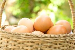 Huevos en la cesta Fotografía de archivo libre de regalías