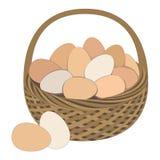 Huevos en la cesta aislada en el fondo blanco Imagen de archivo