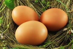 Huevos en la hierba Imagen de archivo