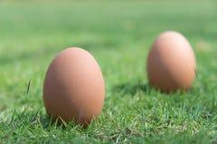 Huevos en la hierba verde Foto de archivo