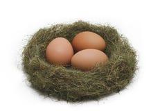 Huevos en la jerarquía Fotografía de archivo