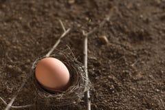Huevos en la jerarquía Fotos de archivo libres de regalías