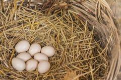 Huevos en la jerarquía del heno en la cesta natural de pollos foto de archivo libre de regalías
