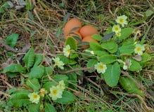Huevos en la primavera fotografía de archivo