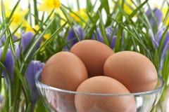 Huevos en la taza de cristal con las azafranes y los narcisos Imágenes de archivo libres de regalías