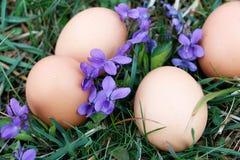 Huevos en la tierra Fotografía de archivo