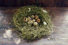 Huevos en los huevos de codornices de la jerarquía Jerarquía en un fondo de madera Foto de archivo libre de regalías