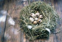 Huevos en los huevos de codornices de la jerarquía Jerarquía en un fondo de madera Imagen de archivo