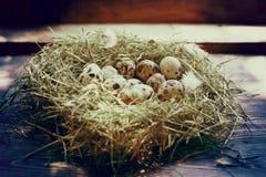 Huevos en los huevos de codornices de la jerarquía Jerarquía en un fondo de madera Imagen de archivo libre de regalías