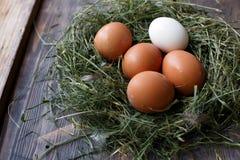 Huevos en los huevos del pollo de la jerarquía Jerarquía en un fondo de madera Foto de archivo libre de regalías