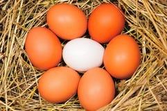 Huevos en paja Fotografía de archivo