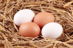Huevos en paja Imagen de archivo libre de regalías