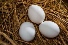 3 huevos en paja Foto de archivo