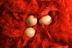 Huevos en plumas rojas Imagen de archivo libre de regalías