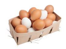 Huevos en rectángulo Foto de archivo
