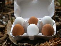 Huevos en un cartón de huevos Imágenes de archivo libres de regalías
