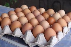 Huevos en un panel de la cartulina Fotografía de archivo libre de regalías