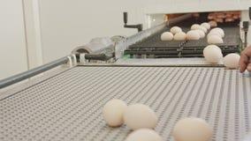Huevos en una banda transportadora en una granja de pollo grande almacen de video