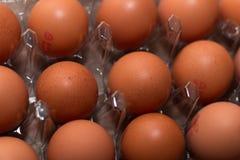 Huevos en una bandeja plástica Foto de archivo