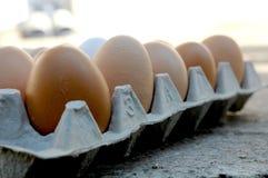Huevos en una fila Imágenes de archivo libres de regalías