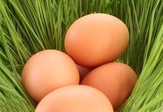 Huevos en una hierba verde Fotos de archivo libres de regalías