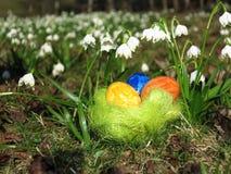 Huevos en una hierba verde Foto de archivo