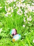 Huevos en una hierba verde Fotografía de archivo