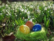 Huevos en una hierba verde Imagen de archivo