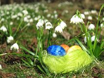 Huevos en una hierba verde Foto de archivo libre de regalías